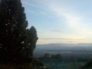 View from Redwood