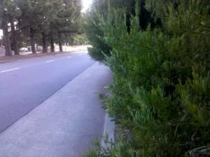 No sidewalk on Redwood