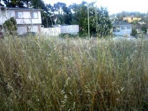 Waist high grass